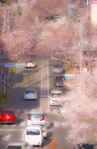 たまプラーザの桜並木と交通の写真素材 [FYI02922469]