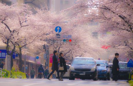 たまプラーザの桜並木と雑踏の写真素材 [FYI02922470]
