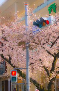 たまプラーザの桜並木と交通の写真素材 [FYI02922476]
