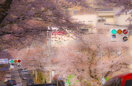 たまプラーザの桜並木と交通の写真素材 [FYI02922478]