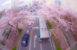たまプラーザの桜並木と交通の写真素材 [FYI02922479]