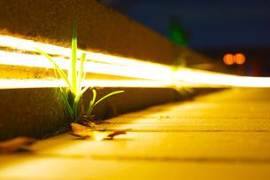 光に照らされる雑草の写真素材 [FYI02922629]