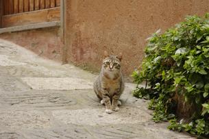道に座っている猫の写真素材 [FYI02923062]