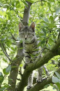木登りする猫の写真素材 [FYI02923313]