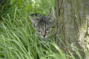 木の陰に隠れる子猫の写真素材 [FYI02923333]