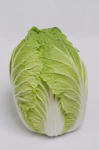 白菜の写真素材 [FYI02923379]