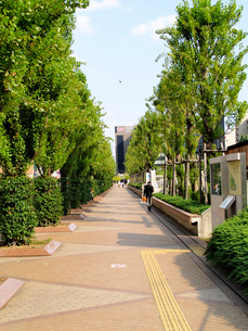 江坂公園北側の街路の写真素材 [FYI02923660]