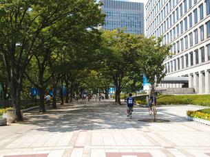 大阪市役所南側の街路樹の写真素材 [FYI02923669]
