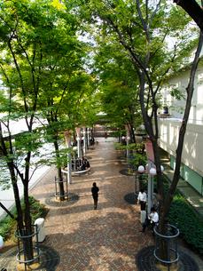 OBPキャッスルタワー横の街路樹の写真素材 [FYI02923686]