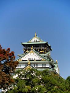 木々に囲まれる大阪城の写真素材 [FYI02923716]