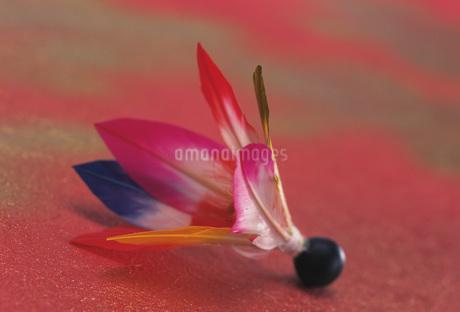 羽根の写真素材 [FYI02923968]