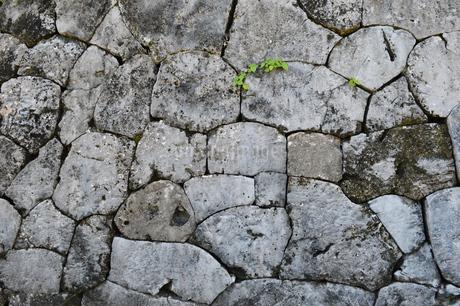 南国沖縄の古い石壁の写真素材 [FYI02925283]