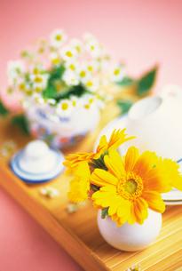 花とカップの写真素材 [FYI02926108]