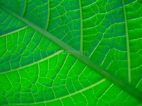 葉のアップの写真素材 [FYI02927094]