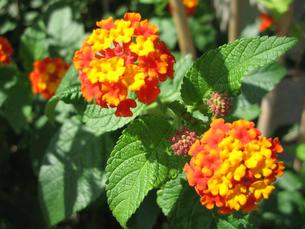 オレンジ色の花の写真素材 [FYI02927095]