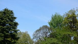 木々と青空の写真素材 [FYI02927269]
