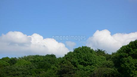 森と青空の写真素材 [FYI02927288]