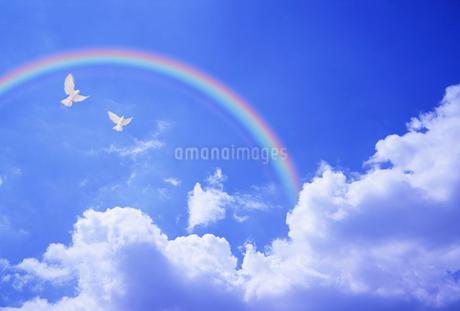 青空を飛ぶハトと虹のイラスト素材 [FYI02927580]