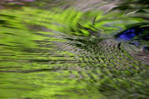 川の流れに写る緑の写真素材 [FYI02927636]