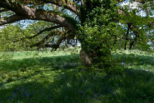 ツタの絡まった木の写真素材 [FYI02927680]