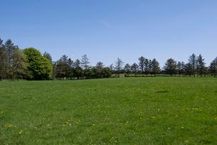 タンポポが咲く草原の写真素材 [FYI02927683]