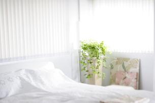ベットと植物とテキスタイルパネルのある部屋の写真素材 [FYI02927698]