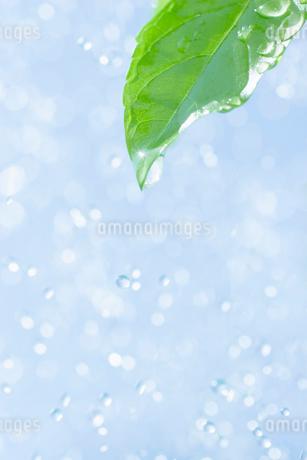 葉と水しぶきの写真素材 [FYI02927865]