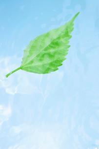 水中に舞う葉っぱの写真素材 [FYI02927868]
