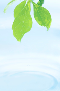 葉と水滴の写真素材 [FYI02927869]