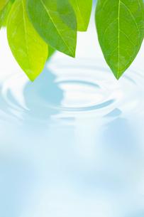 葉と水面の波紋の写真素材 [FYI02927870]