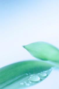 水滴が付いている植物の葉の写真素材 [FYI02927875]