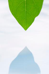 葉と水面にうつる葉の影の写真素材 [FYI02927877]