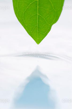 葉と水面と水滴の写真素材 [FYI02927878]