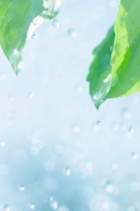 葉と水しぶきの写真素材 [FYI02927880]