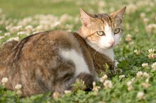 野原に座る猫の写真素材 [FYI02927906]