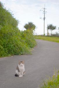 公園の道と猫の写真素材 [FYI02927969]