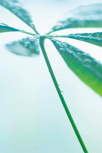 葉と水滴の写真素材 [FYI02927973]