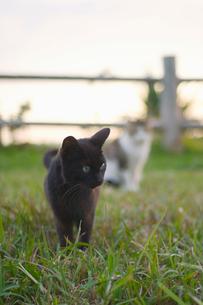 公園の猫たちの写真素材 [FYI02927999]