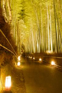 嵐山花灯路 竹林ライトアップの写真素材 [FYI02928010]