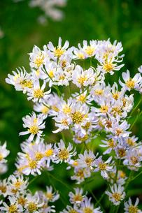 野花の写真素材 [FYI02928070]