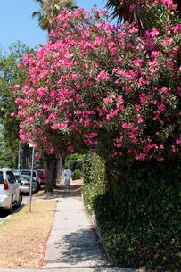 花の咲く通りの写真素材 [FYI02928194]