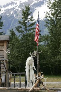 星条旗とシロクマの毛皮の写真素材 [FYI02928218]