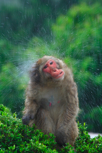 猿の写真素材 [FYI02928451]