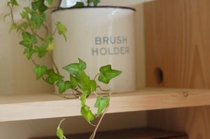 木製の棚の上の植物(アイビー)の写真素材 [FYI02928671]