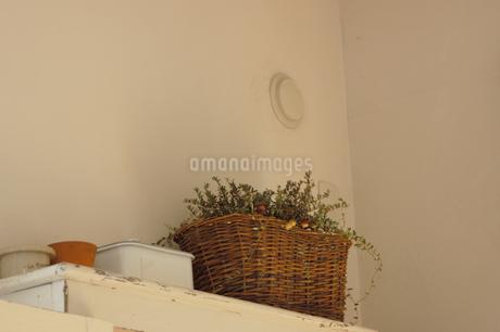 棚の上の植物のバスケットの写真素材 [FYI02928672]