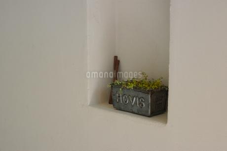 白壁の棚に置かれた植物と小物の写真素材 [FYI02928676]