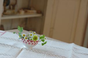 テーブルクロスの上の花の写真素材 [FYI02928684]