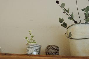 棚の上の植物と小物の写真素材 [FYI02928686]