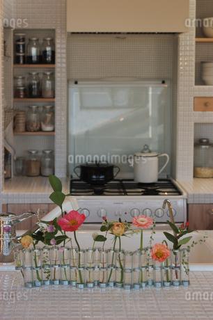 キッチンの花とガス台の写真素材 [FYI02928695]