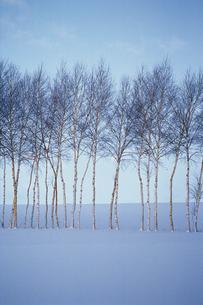 雪原と樹木の写真素材 [FYI02928768]